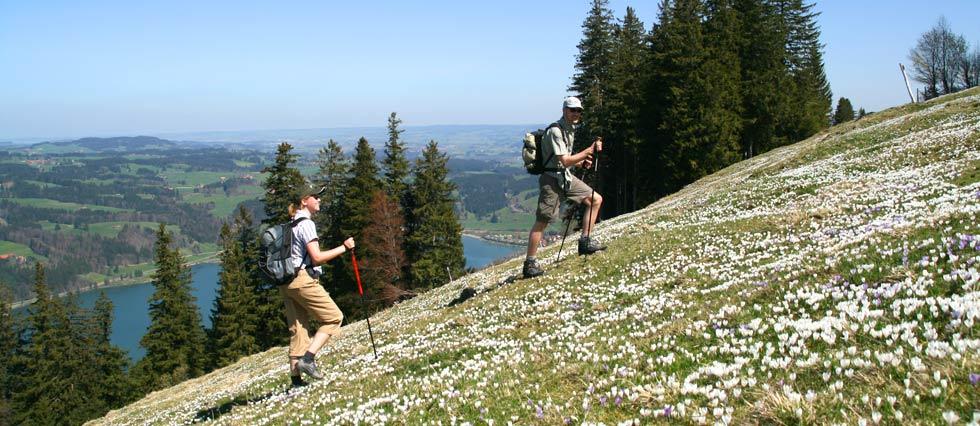 Hoger gelegen in de bergen zijn er ook volop wandelwegen te vinden. Hoe u de toppen ook bereikt, het uitzicht is er adembenemend.